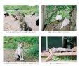 画像4: 動物いのちの会いわて 写真集